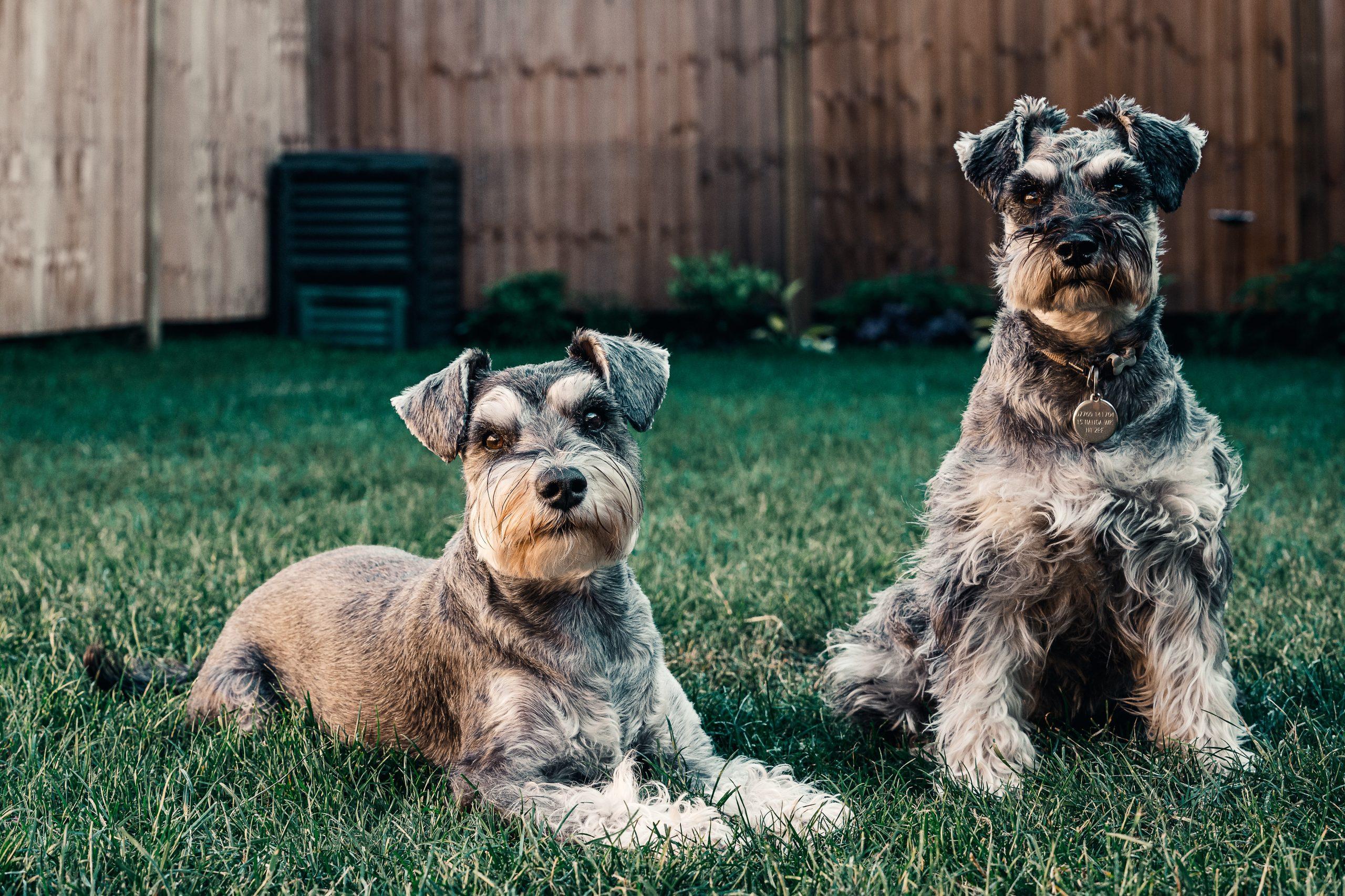 Hypoallergene Hunde: Gibt es sie?